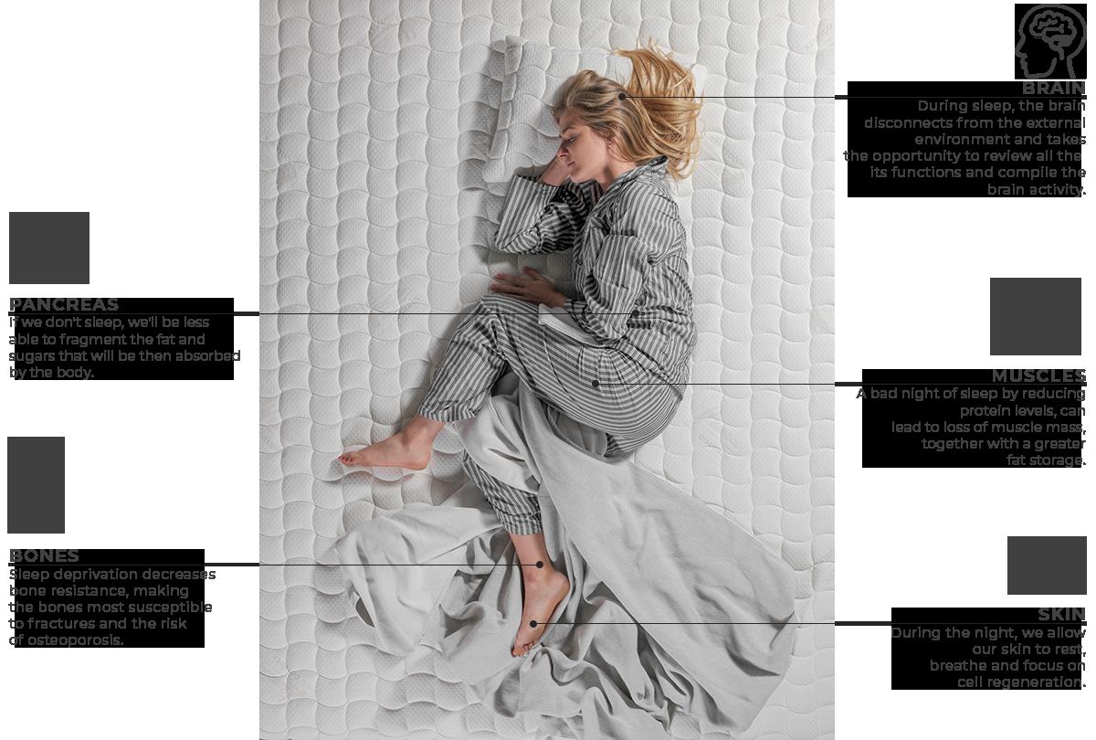 What happens when we sleep colunex o que acontece durante o sono en