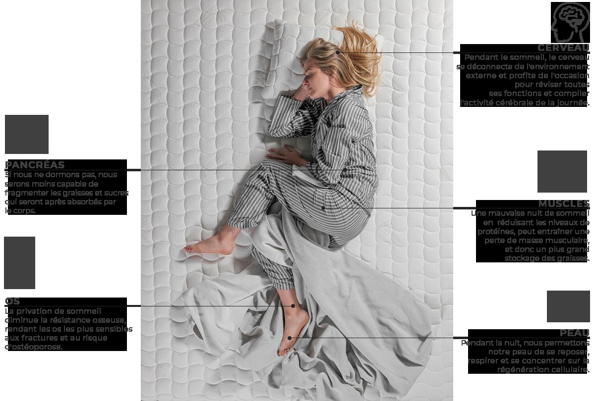 Qu'est-ce qui se passe quand on dort? colunex o que acontece durante o sono fr